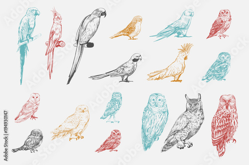 Illustration drawing style of parrot birds collection Canvas Print