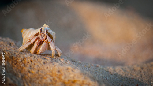 Photo The Hermit Crab