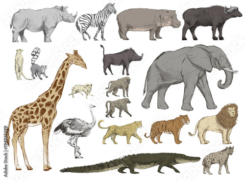 Illustration drawing style of animals collection Wallpaper Mural