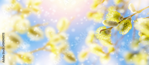 Fotografering Spring natural bright background