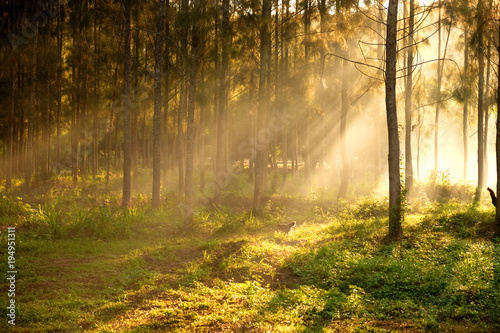 Fotobehang Natuur sunlight breaking through the trees and rays of light,Thailand