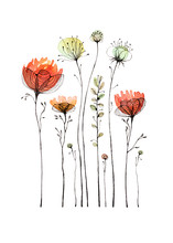 Wildflowers And Poppy Painted In Watercolor And Ink Pen. Isolated On White Background. A Greeting Card.