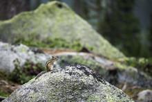 A Little Smart Chipmunk