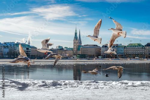 Fotomural  Hamburg Alster im Schnee / Winter mit Möwen und blauem Himmel