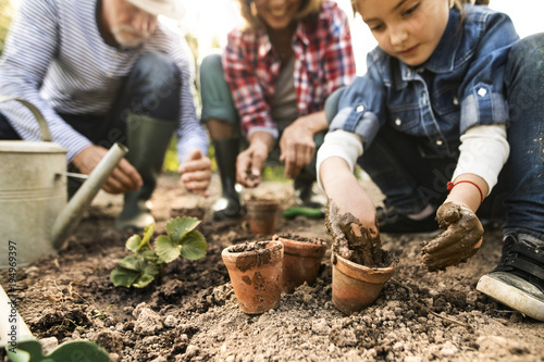 Obraz Senior couple with granddaughter gardening in the backyard garden. - fototapety do salonu