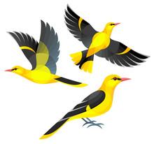 Stylized Birds - Eurasian Golden Oriole