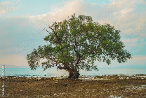 Single green tree at seaside during dusk