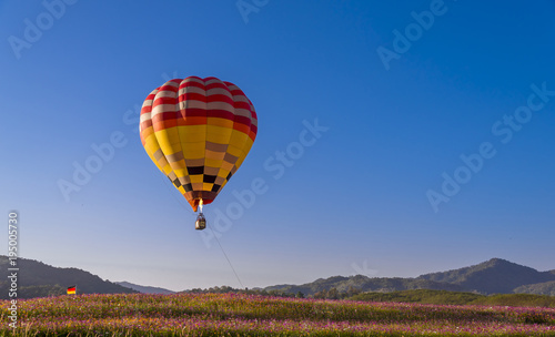 colorful hot air balloon flying on beautyful cosmos field