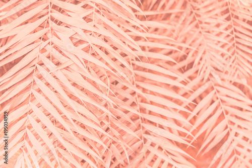 Fotografía  Pink plant