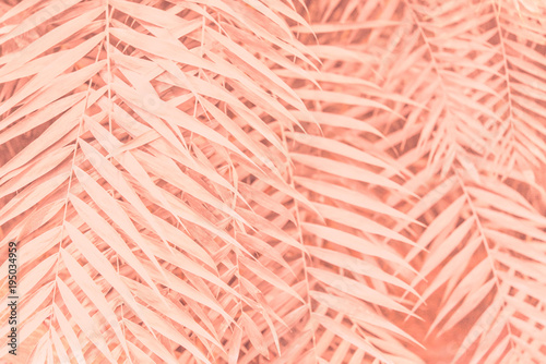 Valokuva  Pink plant