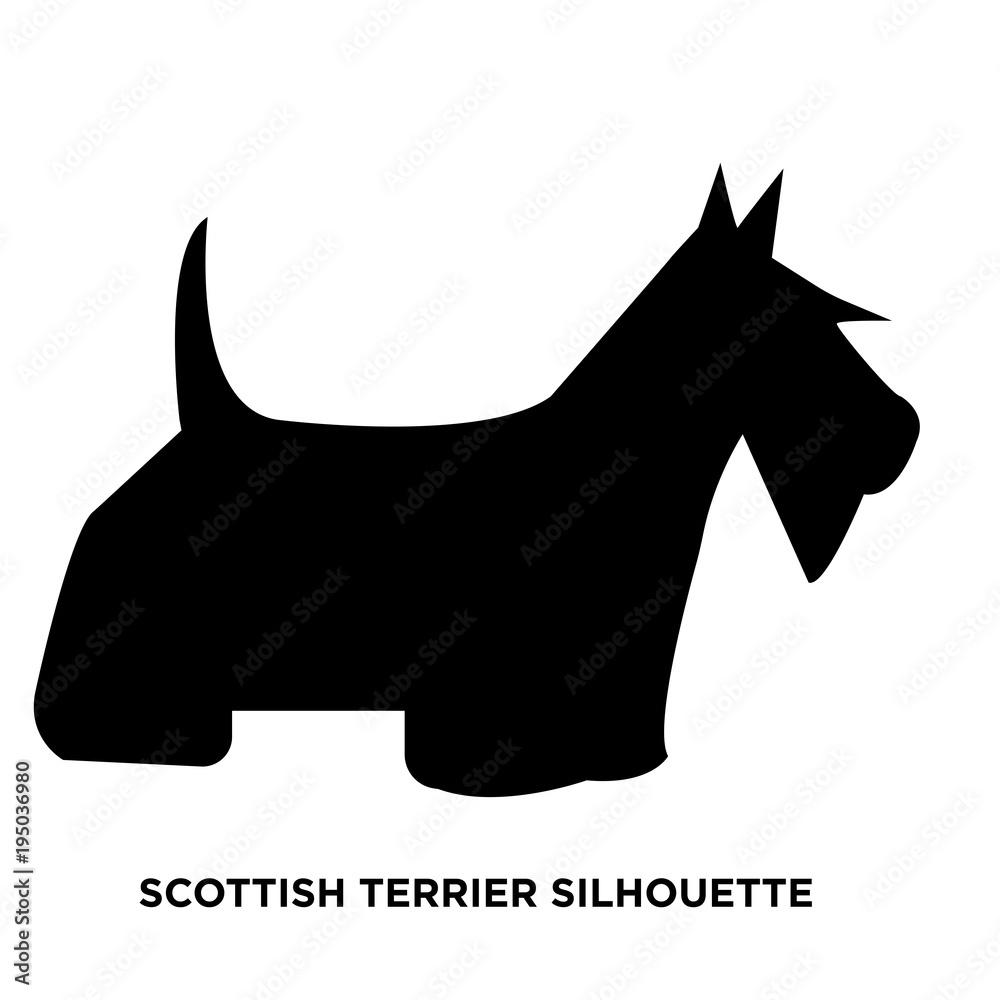 Fototapeta scottish terrier silhouette on white background