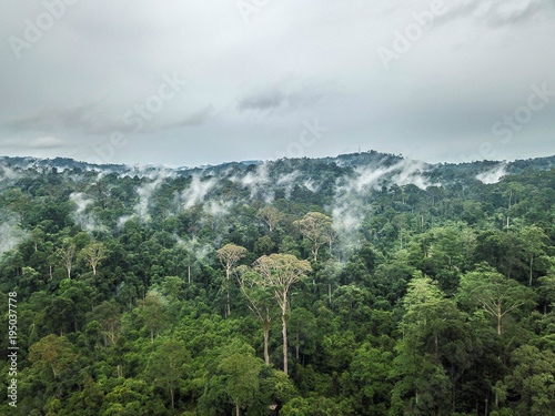 Poster Khaki Aerial of Tropical Rainforest Dipterocarp Trees