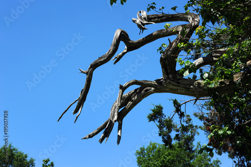 Fotografie, Obraz  Background of Twisted and Gnarled