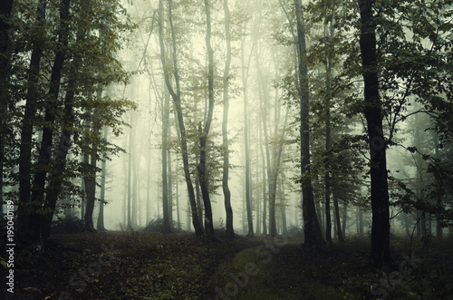 Keuken foto achterwand Olijf dark green foggy woods