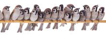 Seventeen Sparrows