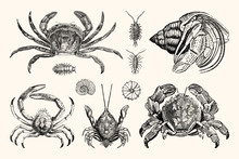 Vintage Crabs And Nautical Line Art - Handcrafted Engravings