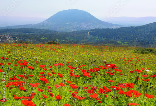Fényképezés spring blooming of poppies in Galilee near the Nazareth, against the background