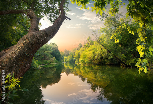 Poster Lac / Etang Pond at sunset