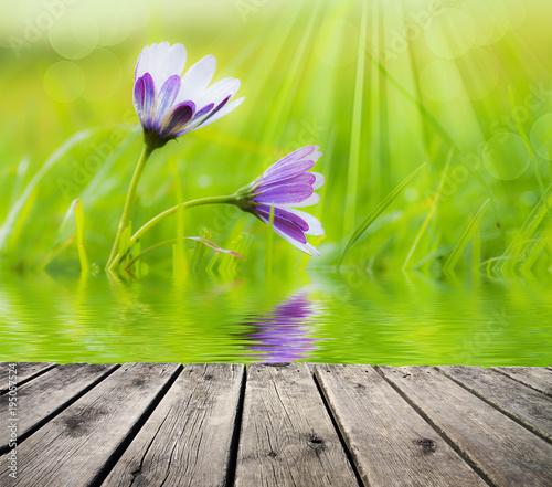 flores entre la hierba Canvas Print