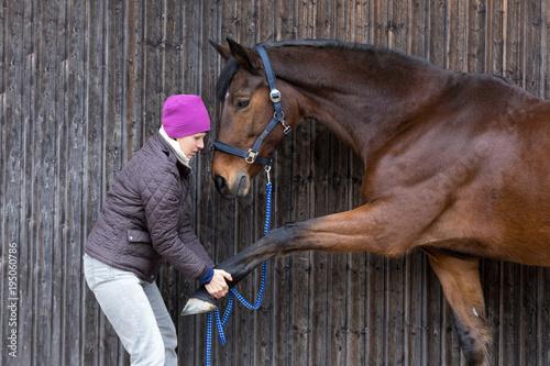 Fototapeta streching horse leg obraz