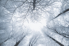 Winter Day In The Forest