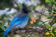 Looking Ahead A Blue Bird Sits...