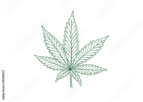 Fototapeta marijuana leaf vector illustration obraz