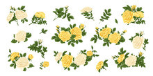 Big Set Of Yellow And White Roses, Bouquets, Flowers And Buds.