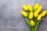 Fototapeta Tulipany - Yellow spring flowers, tulip on a gray background.