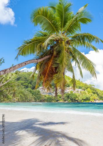Poster Ezel cocotier penché sur plage des îles Seychelles