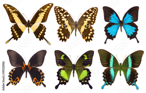 Set of six tropical swallowtail butterflies isolated
