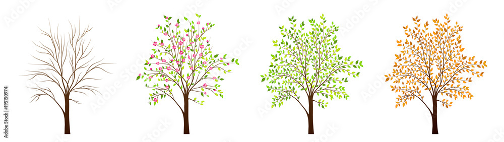 Fototapeta Four seasons of tree vector