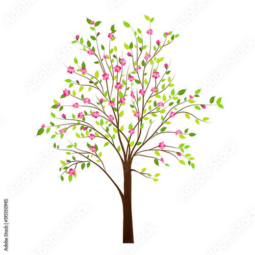 Wiosny drzewo z kwiatami odizolowywającymi na białym tło wektorze