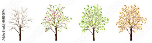 Four seasons of tree vector Fototapeta