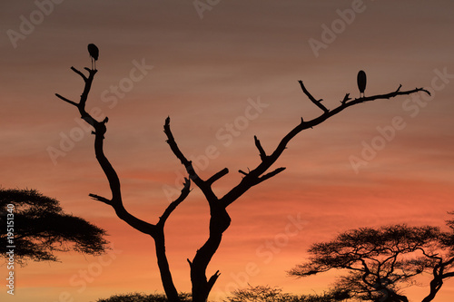 African landscape while in safari
