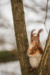 The squirrel eats a nut on the branches of a tree.