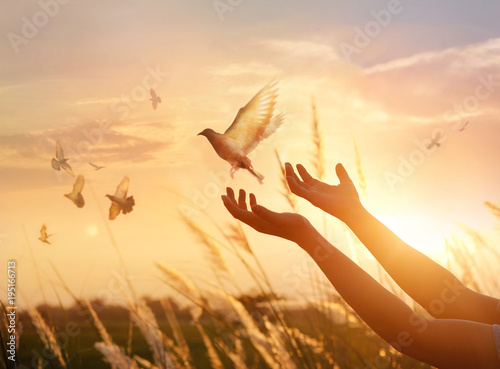 Fotomural  Woman praying and free the birds to*) nature on sunset background, hope concept