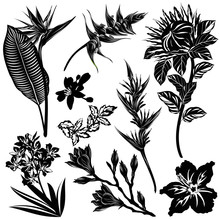 Exotic Flowers Silhouettes (Strelitzia, Heliconia, Protea, Oleander, Hibiscus, Mandarin, Magnolia). Set Of Hand Drawn Vector Illustrations On White Background.