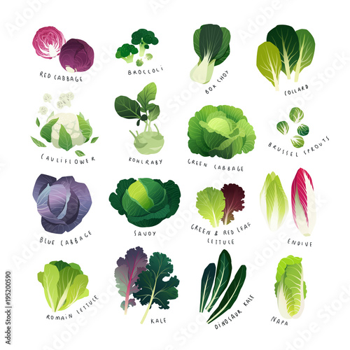 Clip art cabbage collection with broccoli, bok choy, cauliflower, savoy, kohlrab Fototapete