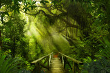 Fototapeta Las - Asian tropical rainforest