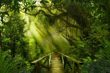 Obraz Asian tropical rainforest