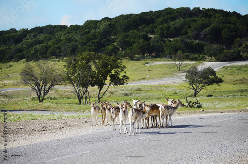 Safari nature reserve with wild animal herd. Poster