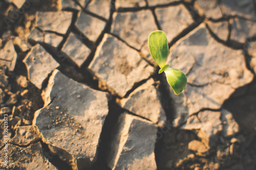 Fototapeta Little green plant on crack dry ground, concept drought