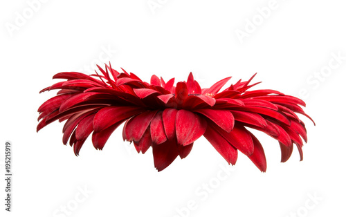 Photographie red gerbera isolated