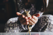Kid Hands Holding Up A Small Gerbil