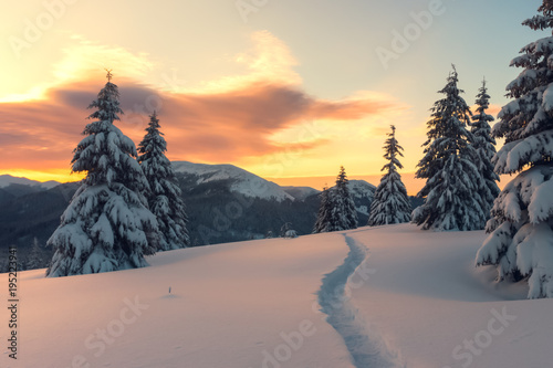 Fantastic orange winter landscape in snowy mountains glowing by sunlight. Dramatic wintry scene with snowy trees. Christmas holiday concept. Carpathians mountain