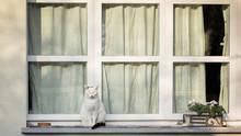 Cat Spends A Summer Evening Si...