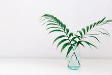Single Green Leaf Plant In Vas...