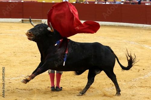 Corrida toros en españa