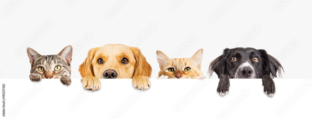 Fototapety, obrazy: Dogs and Cats Peeking Over Web Banner